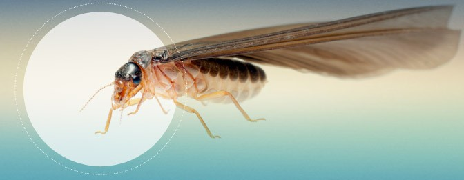 Read more about the article welcome To My online Pest Control