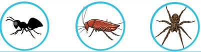 general pest control treatment