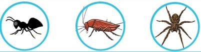 general pest control treatment